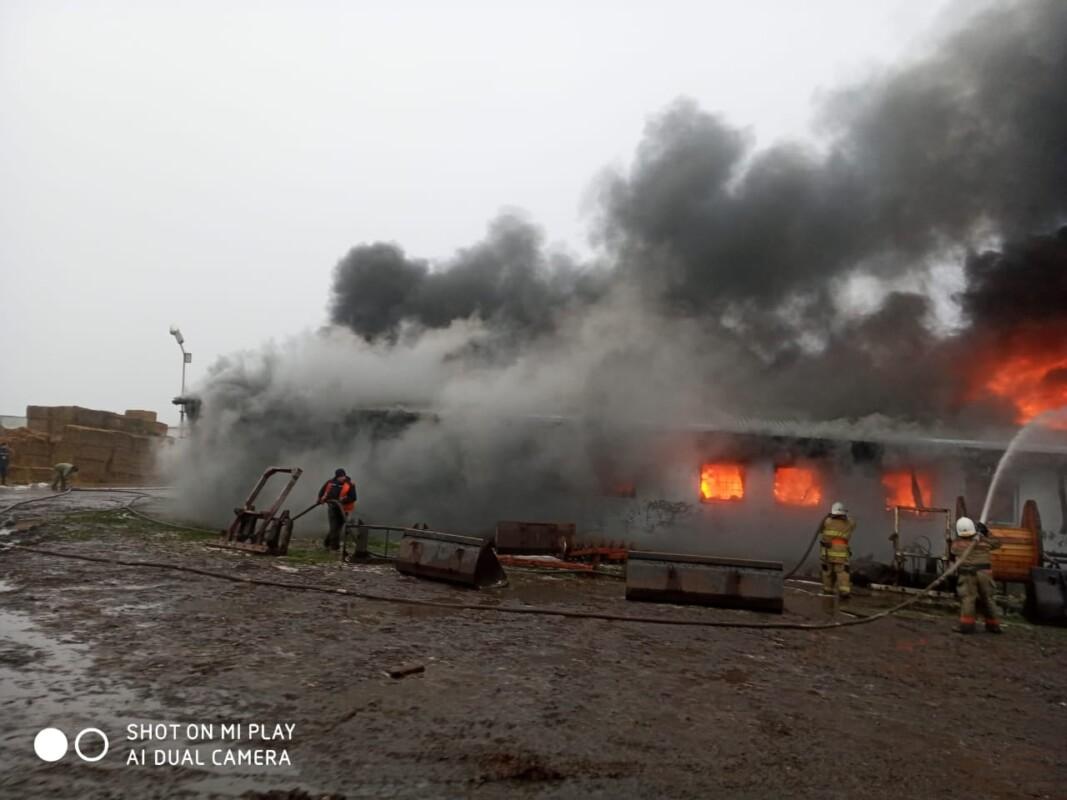 На Тернопільщині масштабна пожежа на підприємстві, де вирощували гриби (ФОТО)