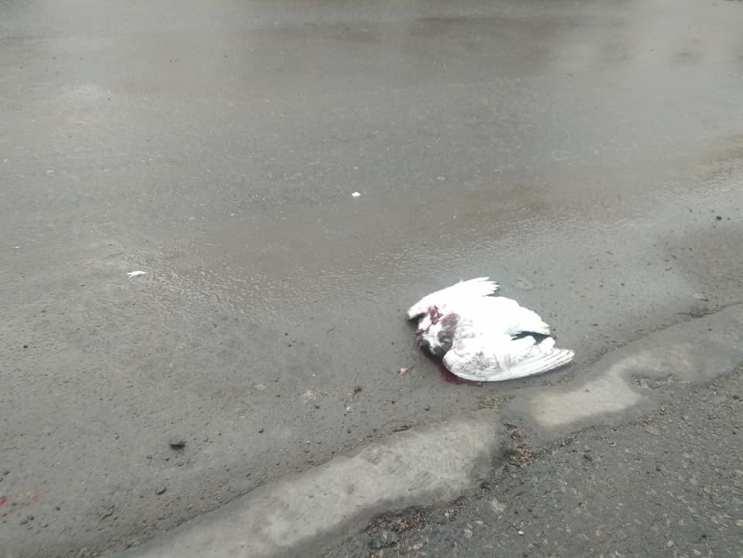 """""""Відкрутили голову і викинули"""": жорстокість деяких тернополян просто вражає (ФОТО)"""
