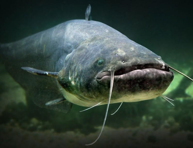 На Тернопільщині рибалка годину витягував велетенського хижака (ФОТО)
