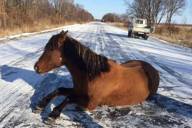 На Тернопільщині чоловік потрапив у лікарню через коня, який послизнувся на дорозі