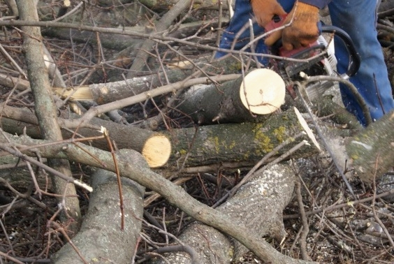 """Підприємці з Тернопільщини """"наламали дров"""" на 800 тисяч"""