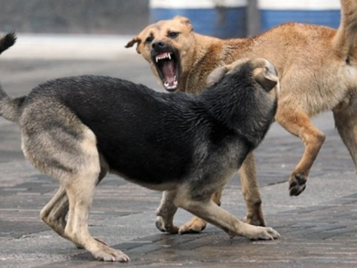 Що робити, якщо вас укусив собака? Історія чоловіка, який потрапив у халепу, бо вакцини у Тернополі немає