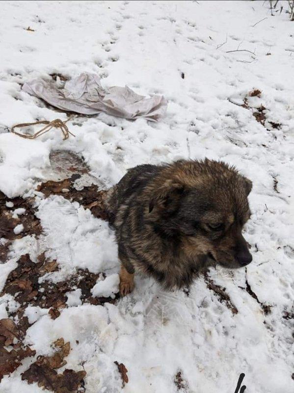 """""""Замотали у мішок і залишили помирати"""": на Тернопільщині невідомі викинули собачку (ФОТО)"""