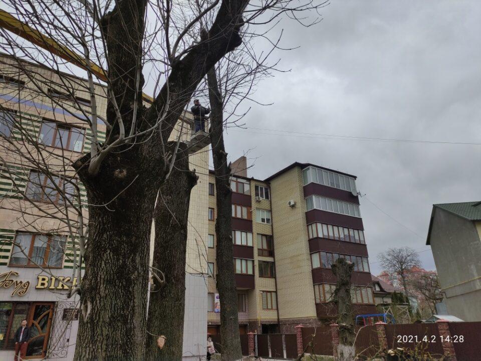 """""""Поводились агресивно та висловлювались нецензурно"""": у Тернополі зрізали липи (ФОТО)"""