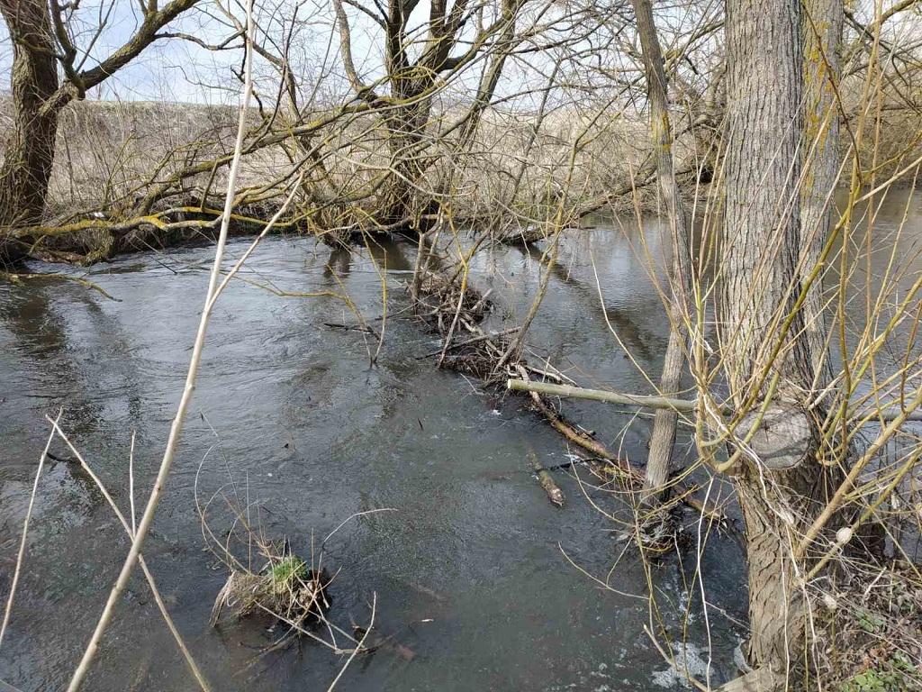 Заростає і міліє: річка Золота Липа на Бережанщині у критичному стані (фото)