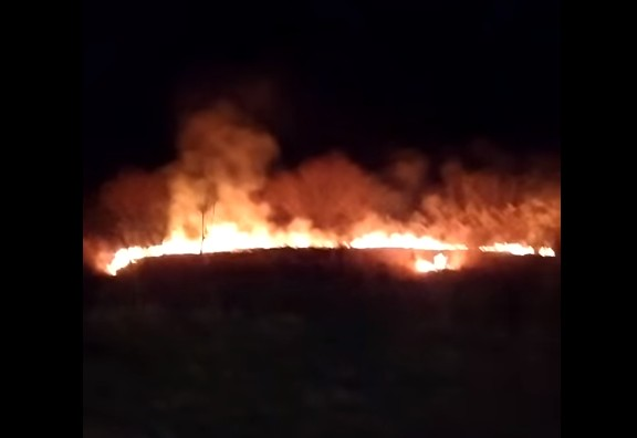 """""""Загибель тварин і птахів"""": на Тернопільщині сталася пожежа, шукають винуватців (ВІДЕО)"""