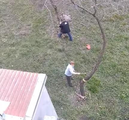 У Тернополі люди самовільно зрізали дерева: поліція відреагувала (ВІДЕО)