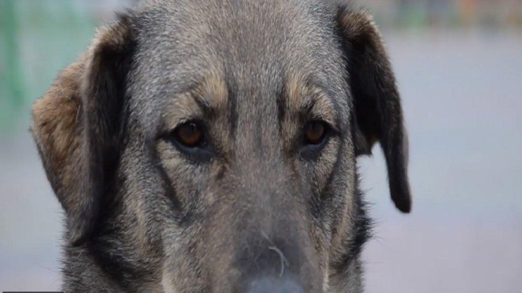 На Тернопільщині собака покусав чоловіка