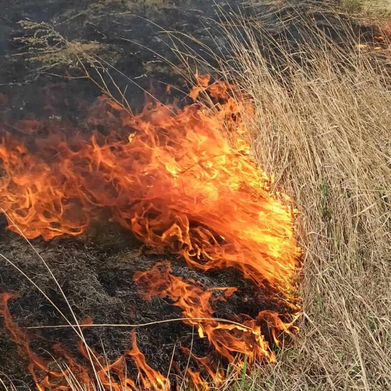 На Тернопільщині спіймали чоловіка, який спалював суху траву. Як його покарали