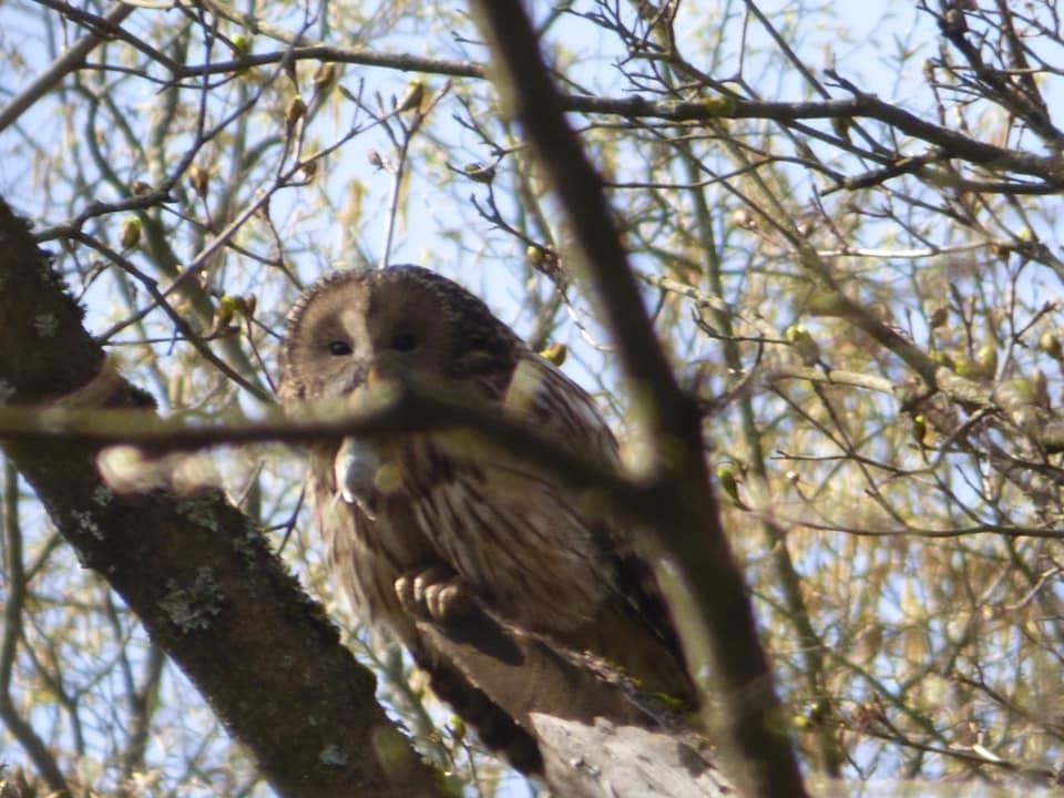 У заповіднику на Тернопільщині оселився рідкісний птах (ФОТО)