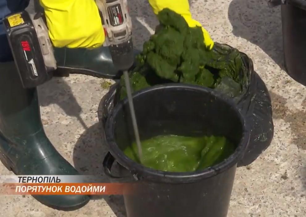 """Тернопільський став """"засіяли"""" водоростями, які мають його очистити (ВІДЕО)"""