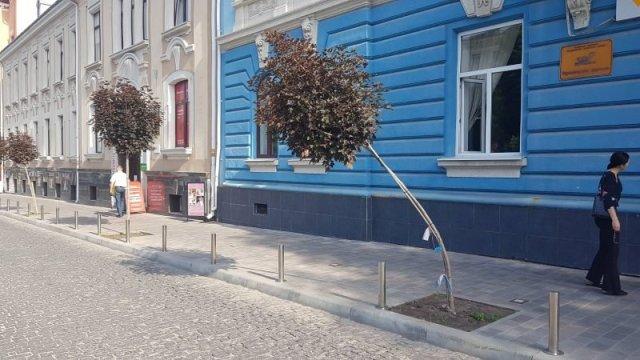 """""""Знущання з дерев"""": у Тернополі невідомі намагалися зламати червонолисті клени (ФОТО)"""