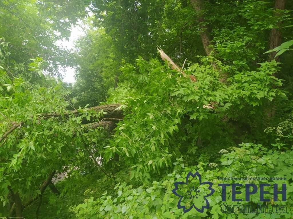 Величезна гілка дерева ледве не впала на перехожих в Тернополі (ФОТО)