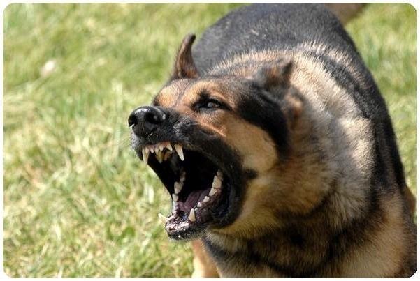 """""""Хотіла погладити…"""": у Тернополі в парку собака покусав дитину"""