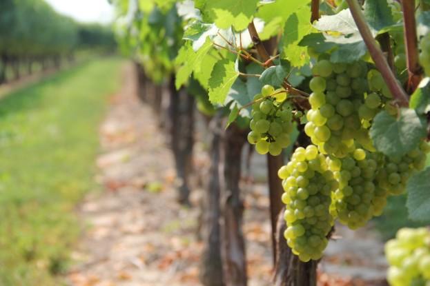 Найбагатший уродженець Тернопільщини володіє виноградниками на мільйони євро у Франції – ЗМІ