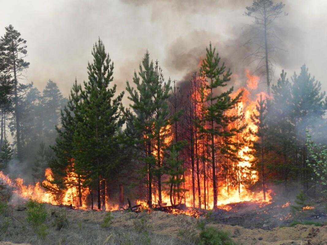 Чоловік палив у лісі сміття, а підпалив… 94 сосни