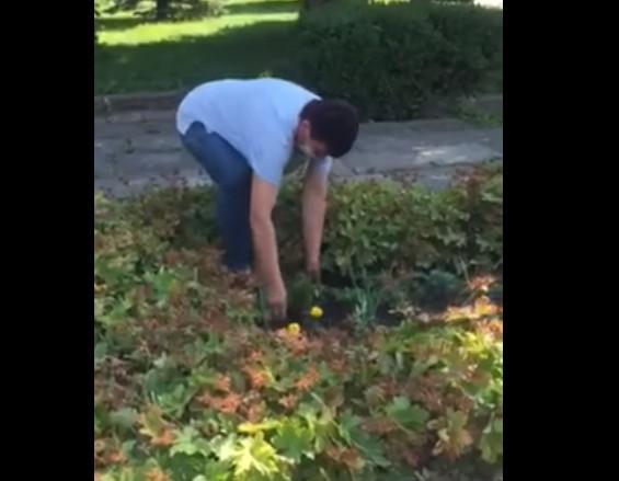 """""""Хотіла на цвинтарі посадити"""": у Бережанах жінка висмикувала квіти на клумбі біля міськради (ВІДЕО)"""