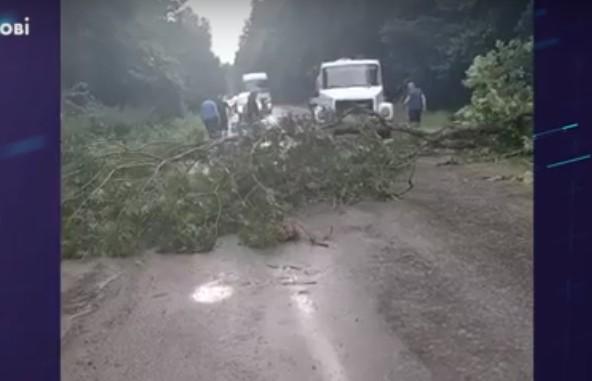 Негода у Чорткові наробила лиха: за кілька хвилин гроза затопила вулиці та повалила дерева (ВІДЕО)