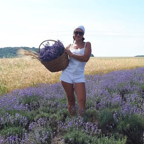 Краса, від якої перехоплює подих: на Тернопільщині зацвіло масштабне лавандове поле (ВІДЕО)