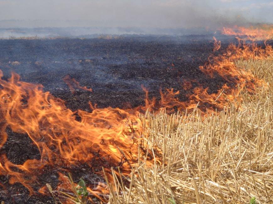 Спалювала стерню і загорілася сама: 78-річну жінку шпиталізували з серйозними опіками