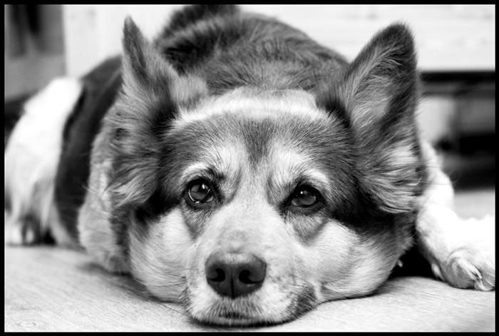 Як покарали пенсіонера з Борщева, який застрелив собаку