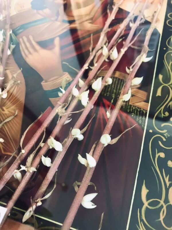 Диво на Тернопільщині: в іконі проросли сухі квіти (ФОТО)