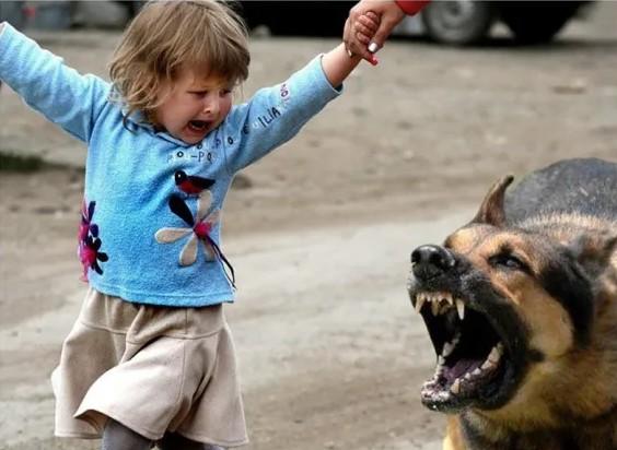 На Тернопільщині на дитину напав сусідський собака: малюк в реанімації