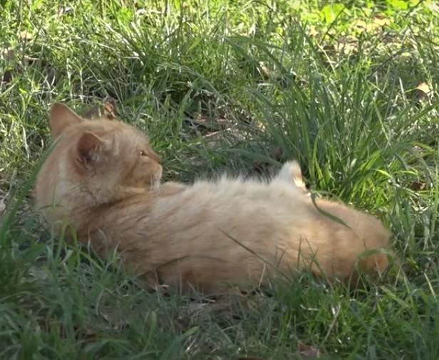 Масова загибель собак та котів: на Тернопільщині отруїли понад 25 домашніх тварин (ВІДЕО)