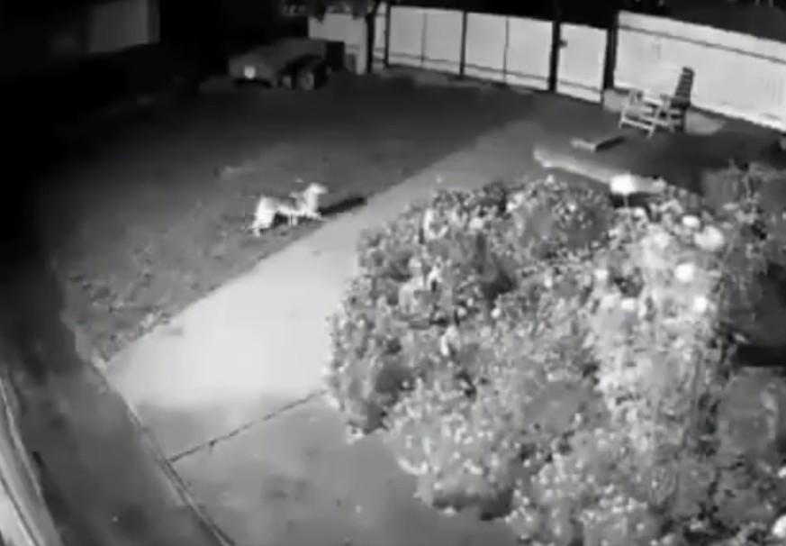 """""""Собаки тікають, усе труситься і схоже на вибух"""": з'явилося відео землетрусу на Тернопільщині"""