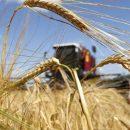 Експорт цьогорічного зерна може принести Україні 6 мільярдів доларів