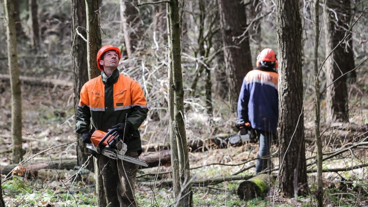 На Чортківщині у лісі смертельно травмувався 29-річний чоловік: поліція з'ясовує, що трапилося