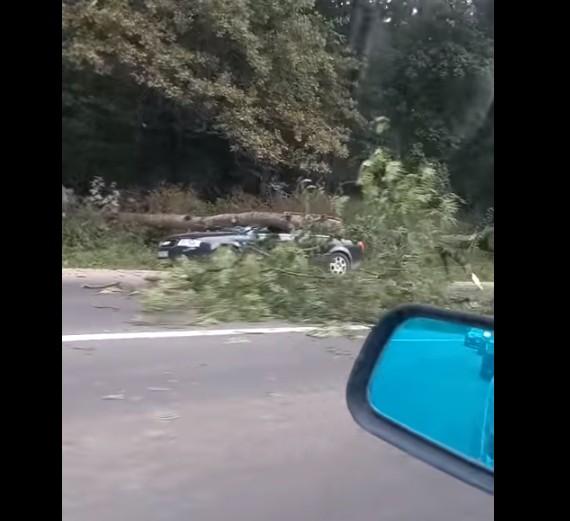 """""""Дорогі гриби"""": на Тернопільщині дерево впало на автомобіль, припаркований біля лісу (ВІДЕО)"""