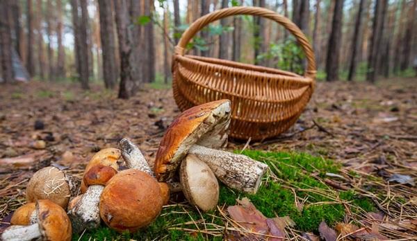Отруєння грибами: на Тернопільщині померла людина