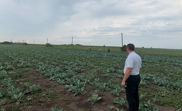 На Теребовлянщині у полі виявили 28 неоформлених працівників, які збирали капусту