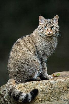 У заповіднику на Тернопільщині сфотографували рідкісного звіра (ФОТОФАКТ)